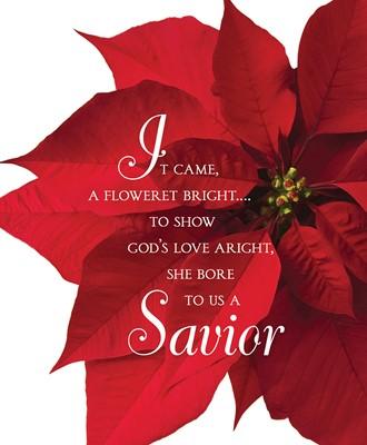 Savior Poinsettia Christmas Bulletin, Large (Pkg of 50) (Loose-leaf)
