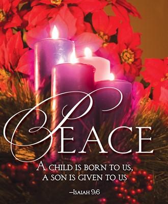 Peace Advent Candle Sunday 4 Bulletin, Large (Pkg of 50) (Loose-leaf)