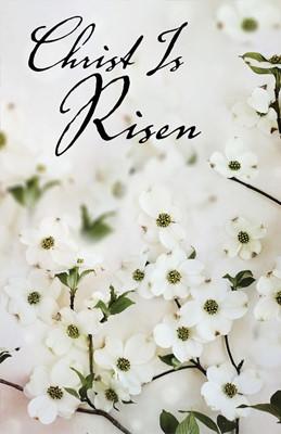 Christ Is Risen Dogwood Easter Bulletin (Pkg of 50) (Loose-leaf)