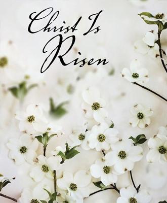 Christ Is Risen Dogwood Easter Bulletin, Large (Pkg of 50) (Loose-leaf)