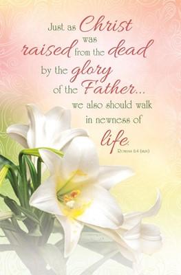 Christ Was Raised Easter Bulletin (pack of 100) (Bulletin)