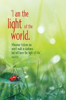 I Am the Light Summer Bulletin (Pkg of 50) (Bulletin)
